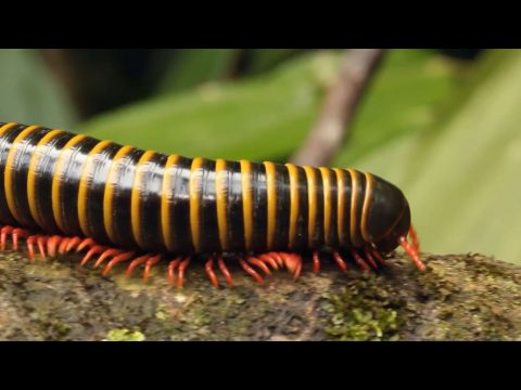 Video Touch Insekter